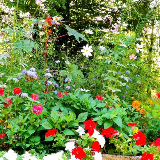 Tallenay fleurs du village