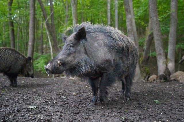 Arrêté : Régulation de la faune sauvage