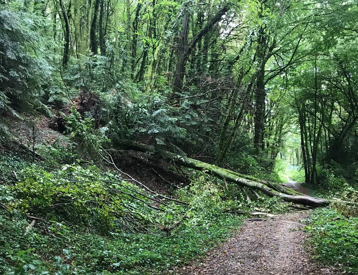 Danger en forêt : fermeture de chemins